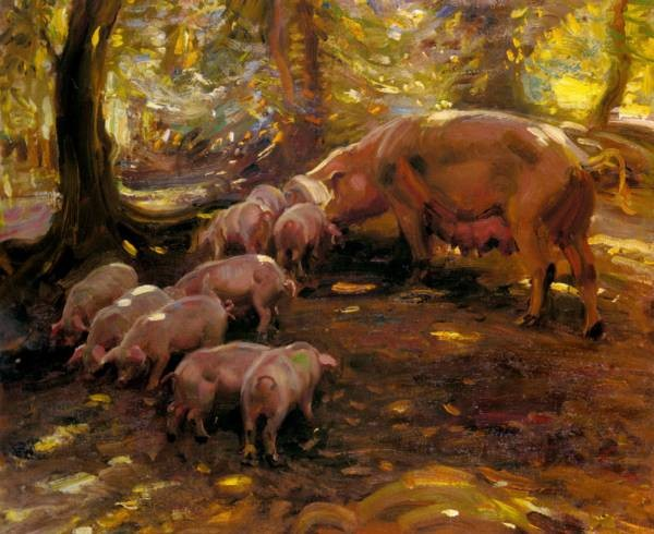 Pigs In A Wood Cornwall